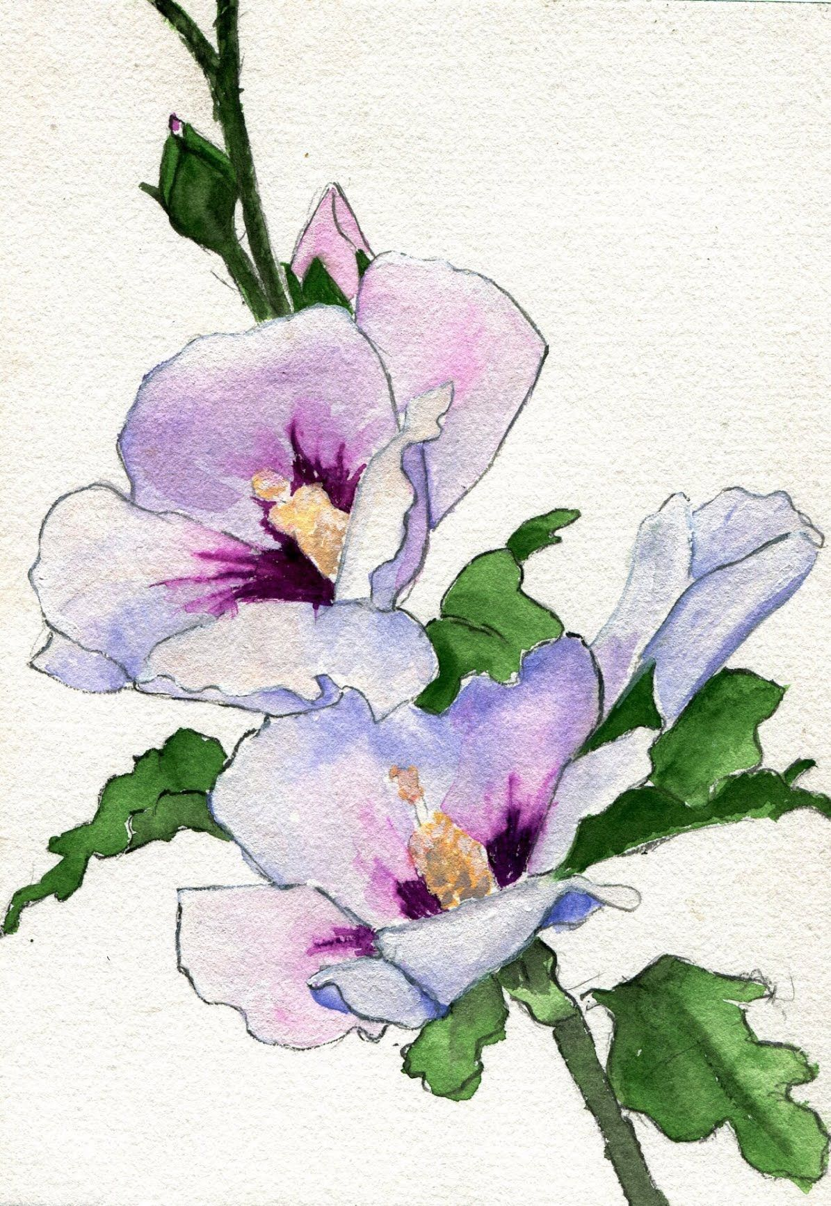 Floralls Havekat Togetherness Watercolor Gouache And