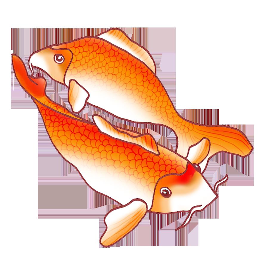 Two Orange Koi Fish Drawing Koi Fish Drawing Koi Fish Fish Drawings