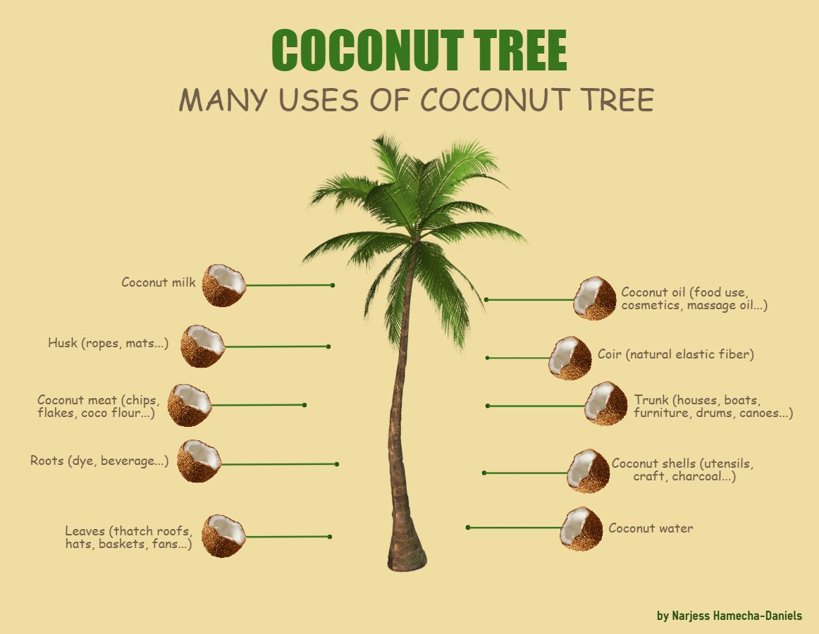 write about coconut tree in hindi