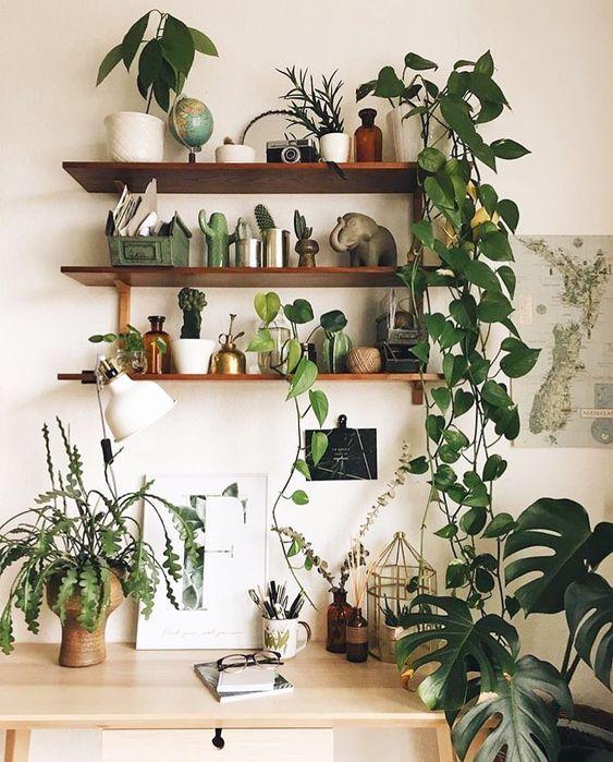 une petite jungle chez soi choux roses plantes d. Black Bedroom Furniture Sets. Home Design Ideas