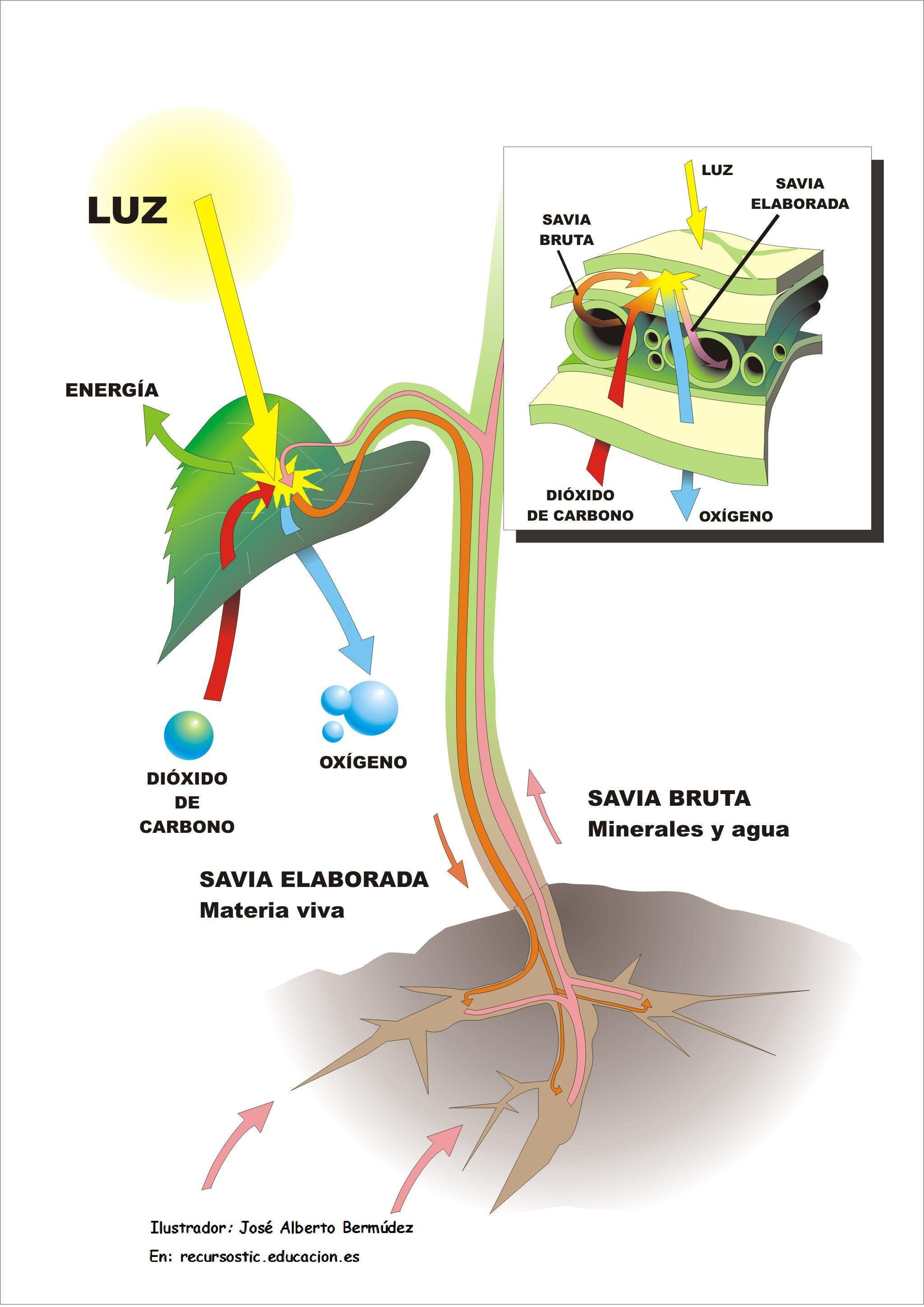 La Fotosintesis 5to Grado Material De Aprendizaje Fotosintesis Fotosintesis De Las Plantas Aprendizaje
