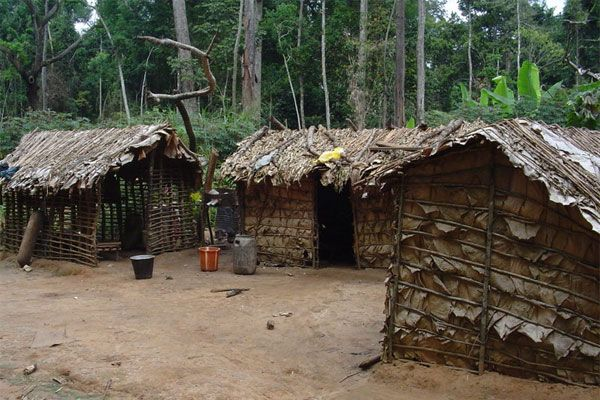 Africa Pygmy House Made With Sticks And Leaves In Northern