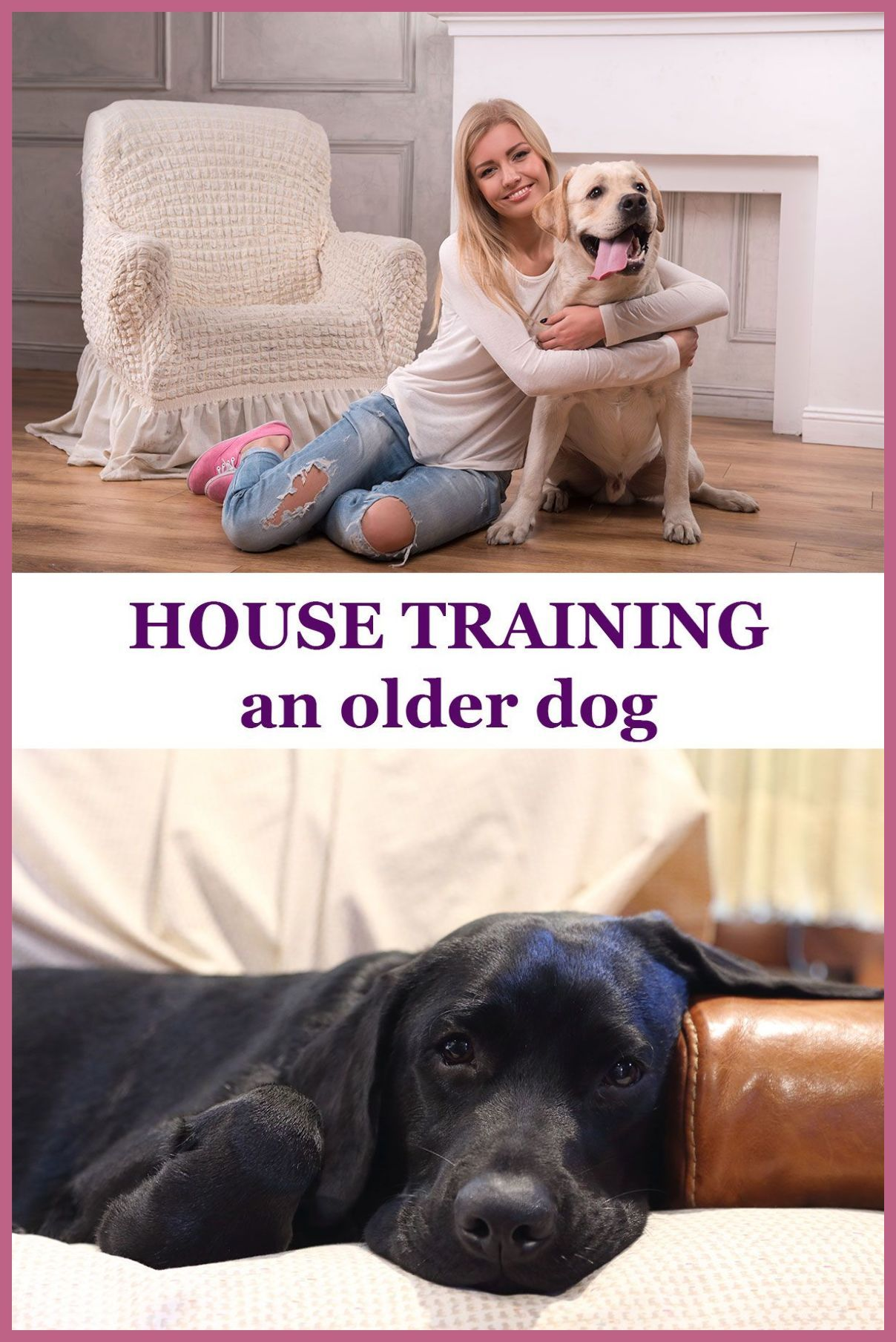 House Train Your Boxer Confidently And On A Regular Training