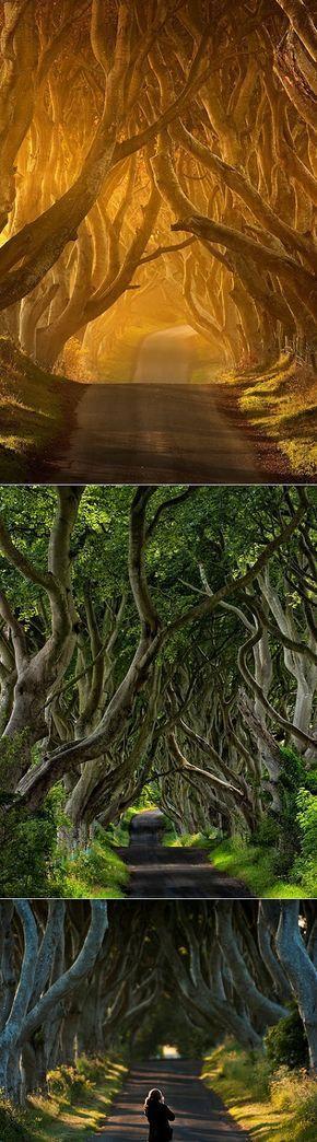 Irelands Mysterious Tree Tunnelirelands