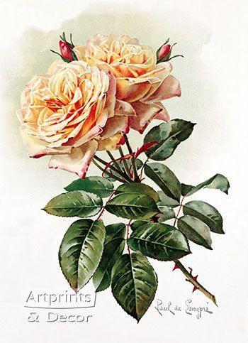 Two Yellow Roses - Art Print
