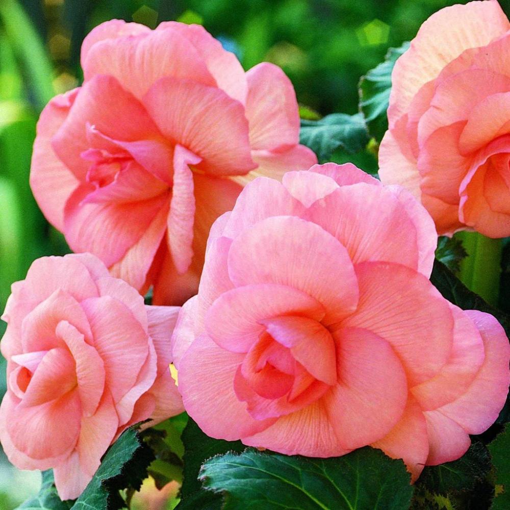 Pin On Garden Wish List
