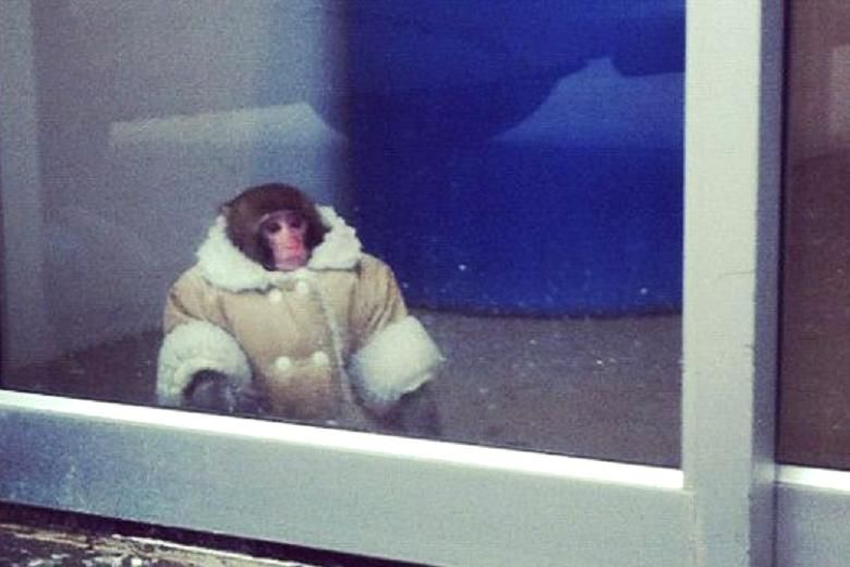 Sheepskin monkey pines for home at Ikea | Monkey monkey and Monkey