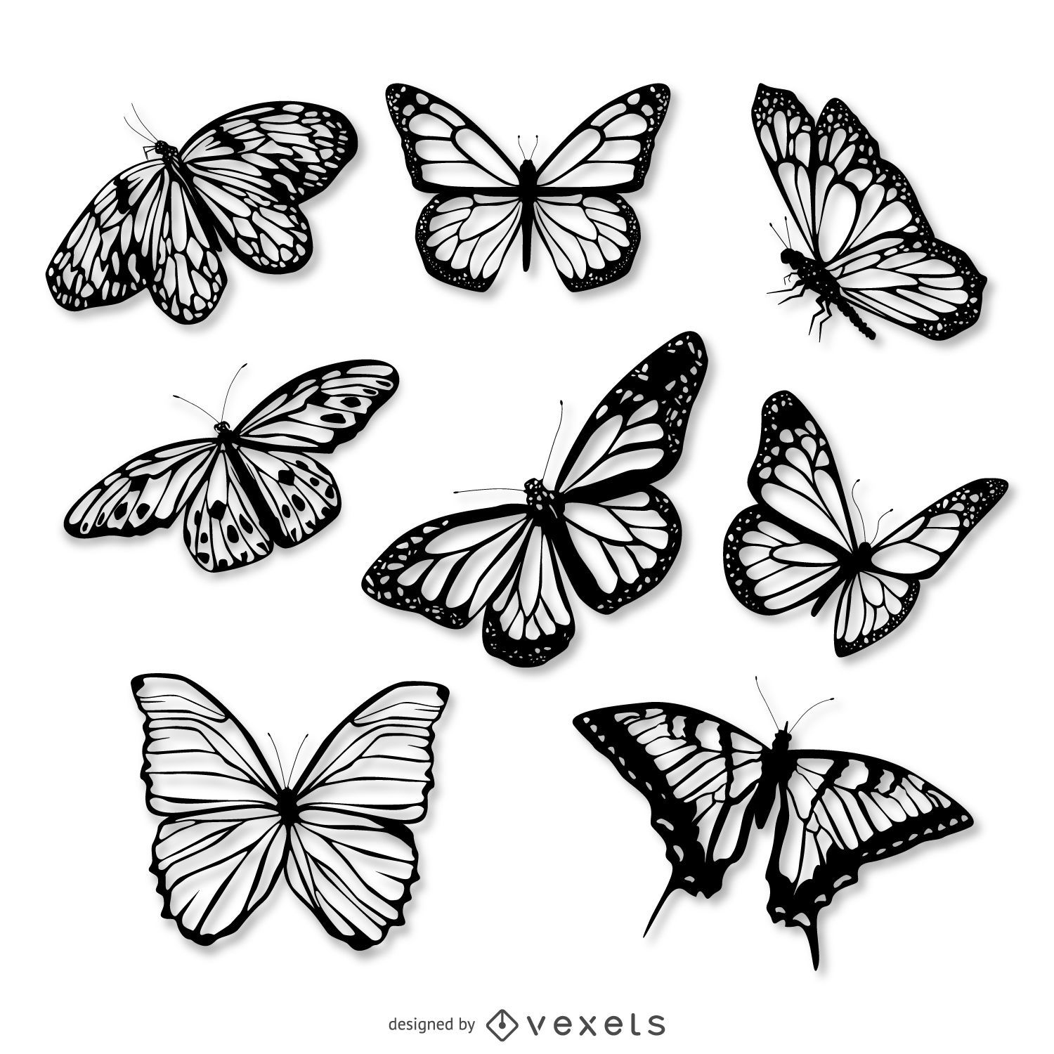 Black And White Papillon Drawing
