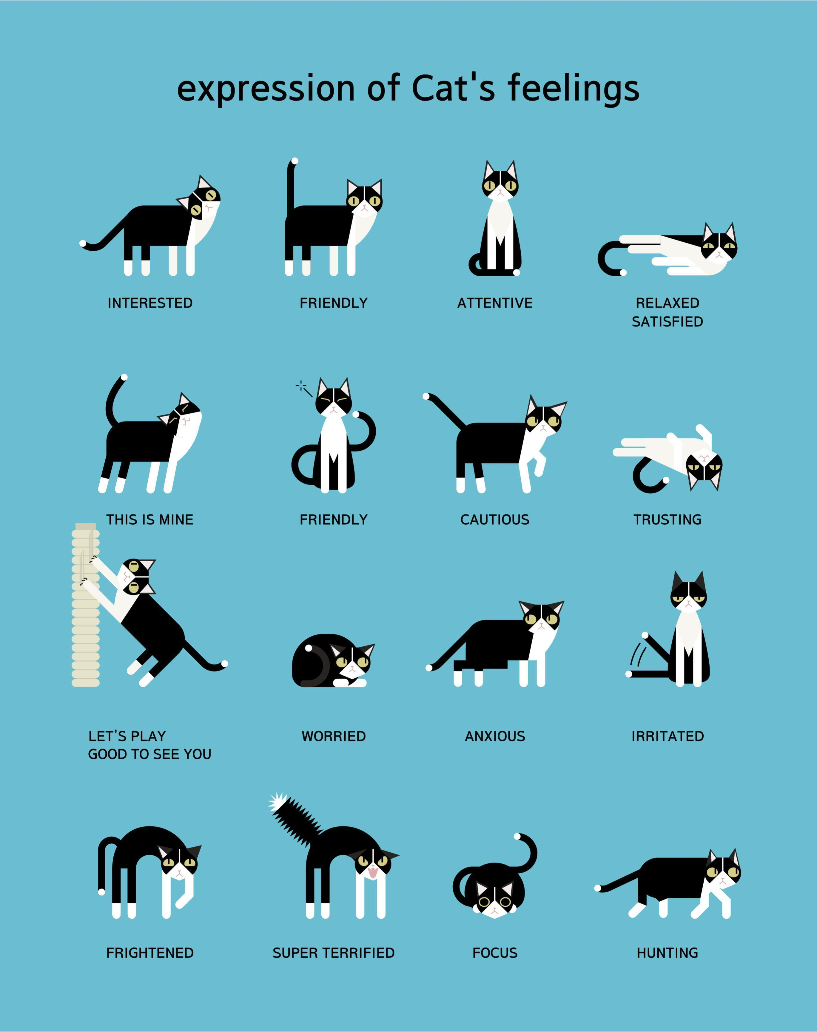 Image Result For Cat Body Language Chart Cat Language Cat Body Cat Facts