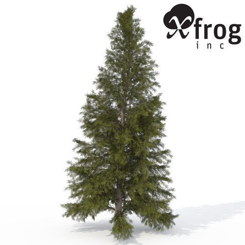 30 Of The Best Free 3d Models On Cgtrader Blog 3d Model Hemlock Colorado Spruce
