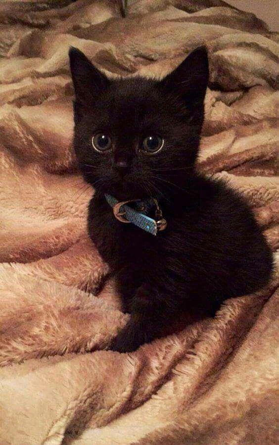 Gorgeous Sweet Thing Kittens Cutest Kitten Adoption