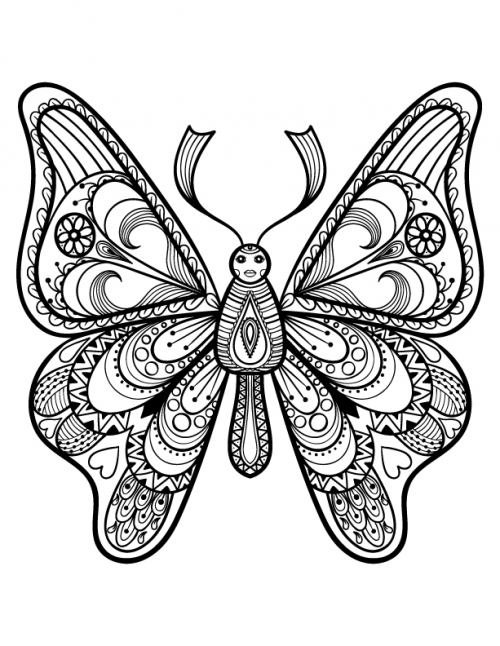 Advanced Butterfly Coloring Page Butterfly Coloring Page Adult