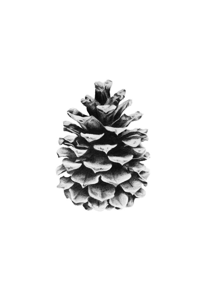 Drawing of pinecone by gjode tattoo pomme de pin dessin nature tatouage - Pomme de pin dessin ...