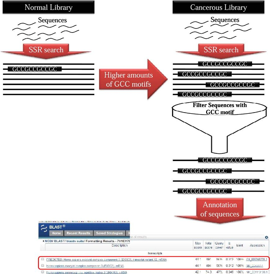 Rna Seq Enables Discovery Of Potential Biomarker Ssrs Simple Sequence Repeats The Recent Exponential In Next Generation Sequencing Sequencing Exponential