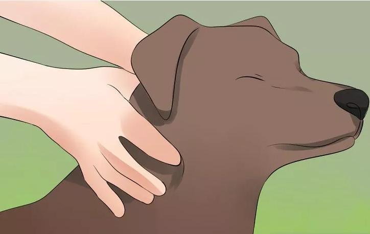 Heb je een hond? Doe dan af en toe DIT! Het kan vele gezondheidsklachten oplossen!