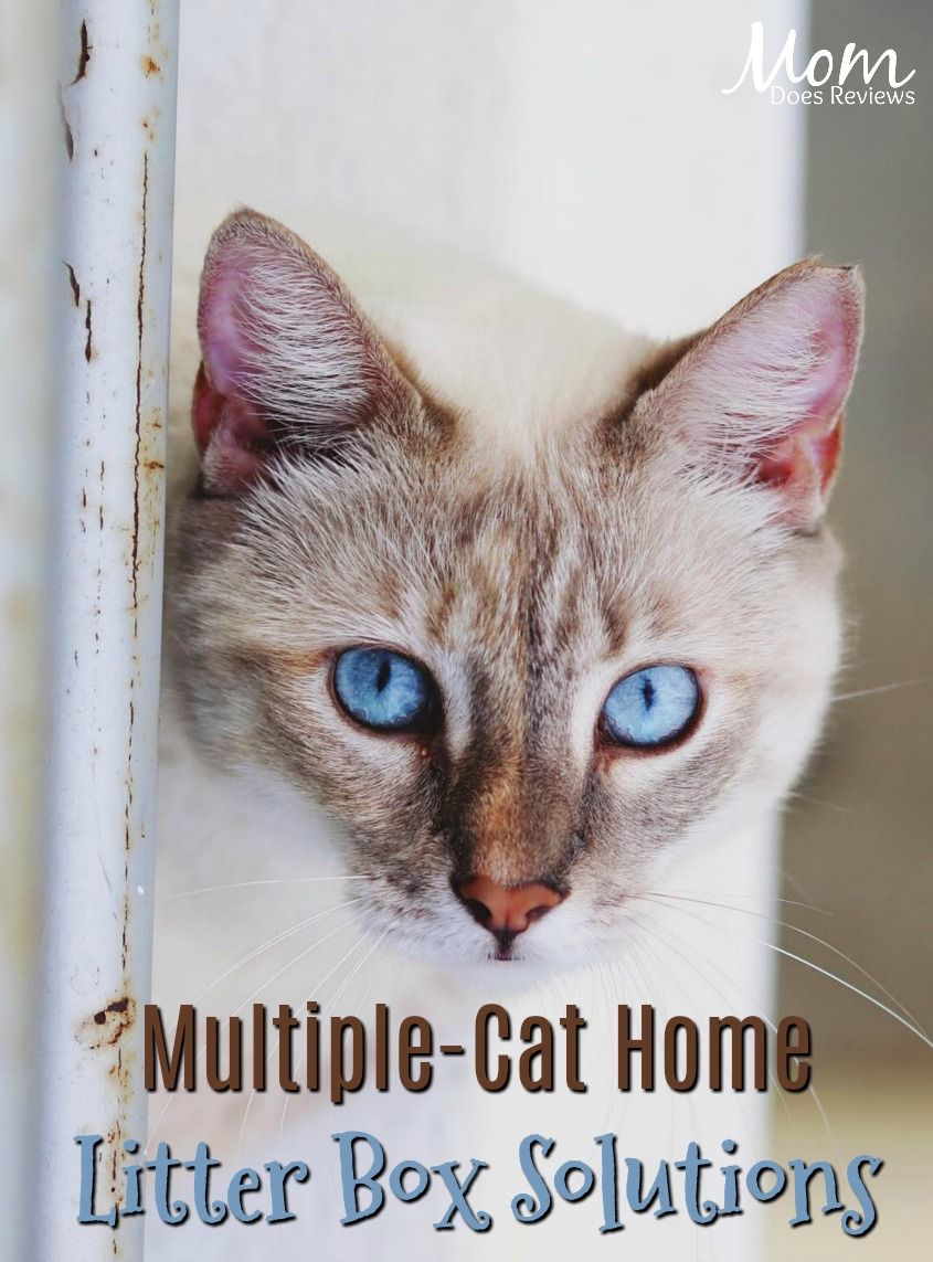 Managing A Multiple Cat Home Using Multiple Litter Boxes Best