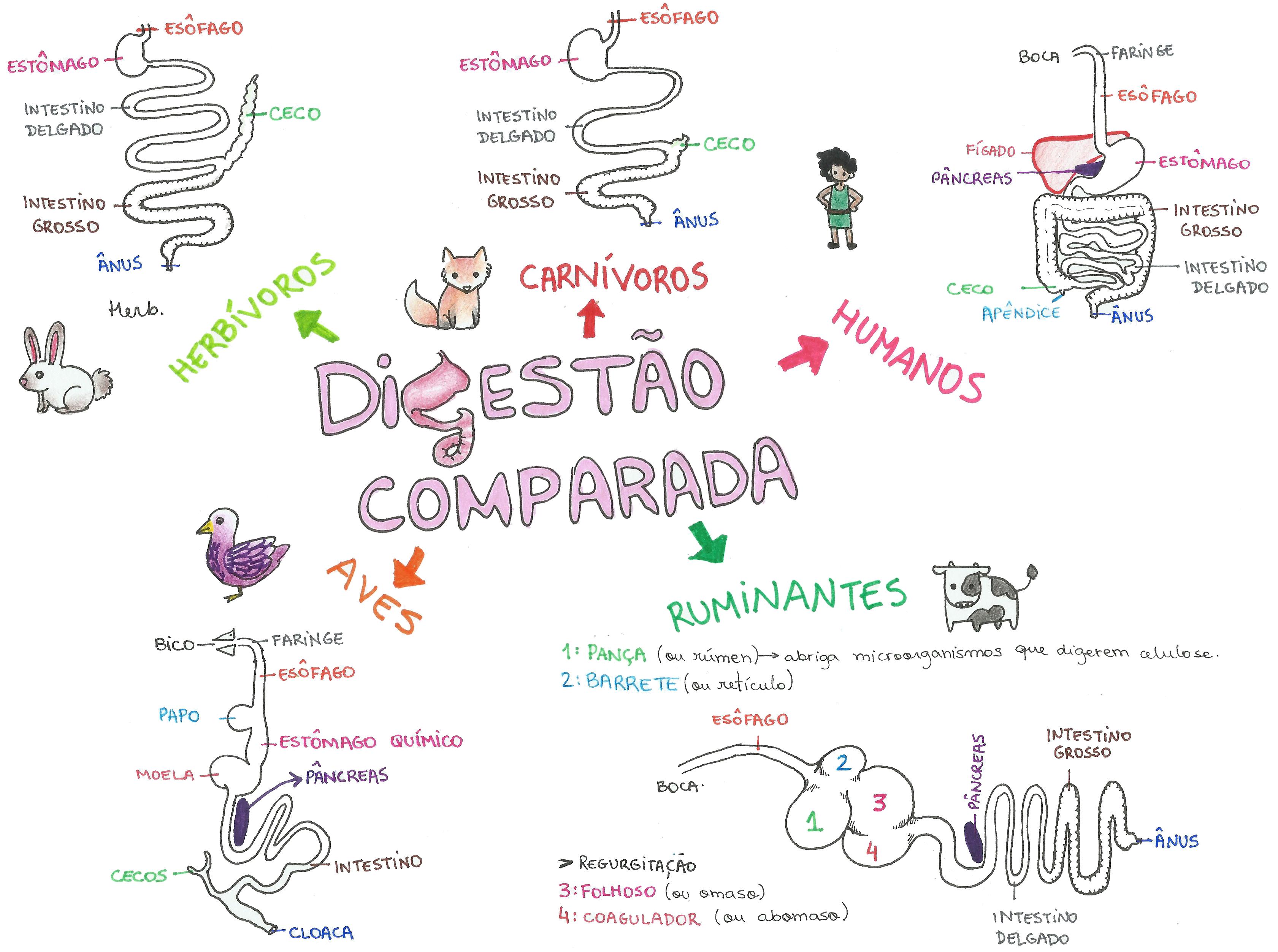 Mapa Mental: Digestão Comparada | Pinterest | Biología, Mapas ...