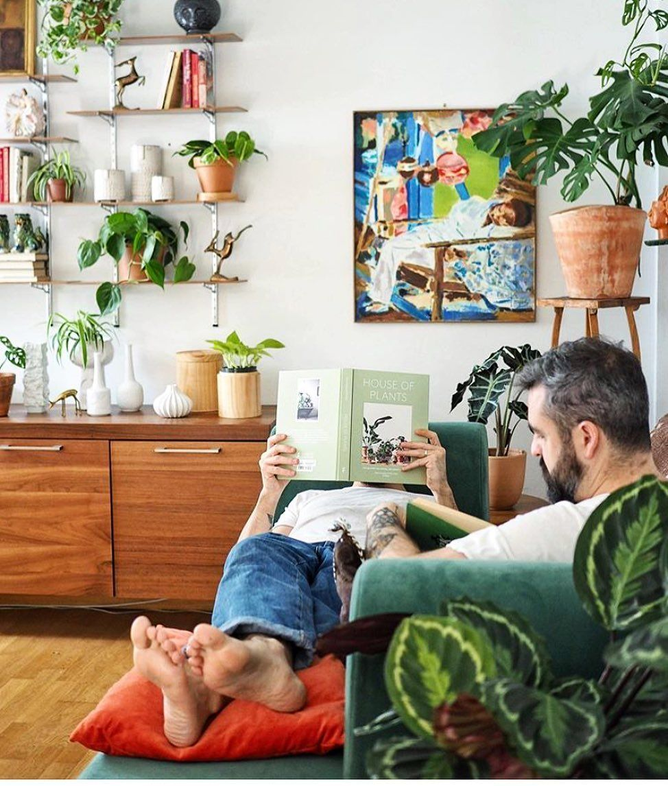 The Best Low Maintenance Indoor House Plants