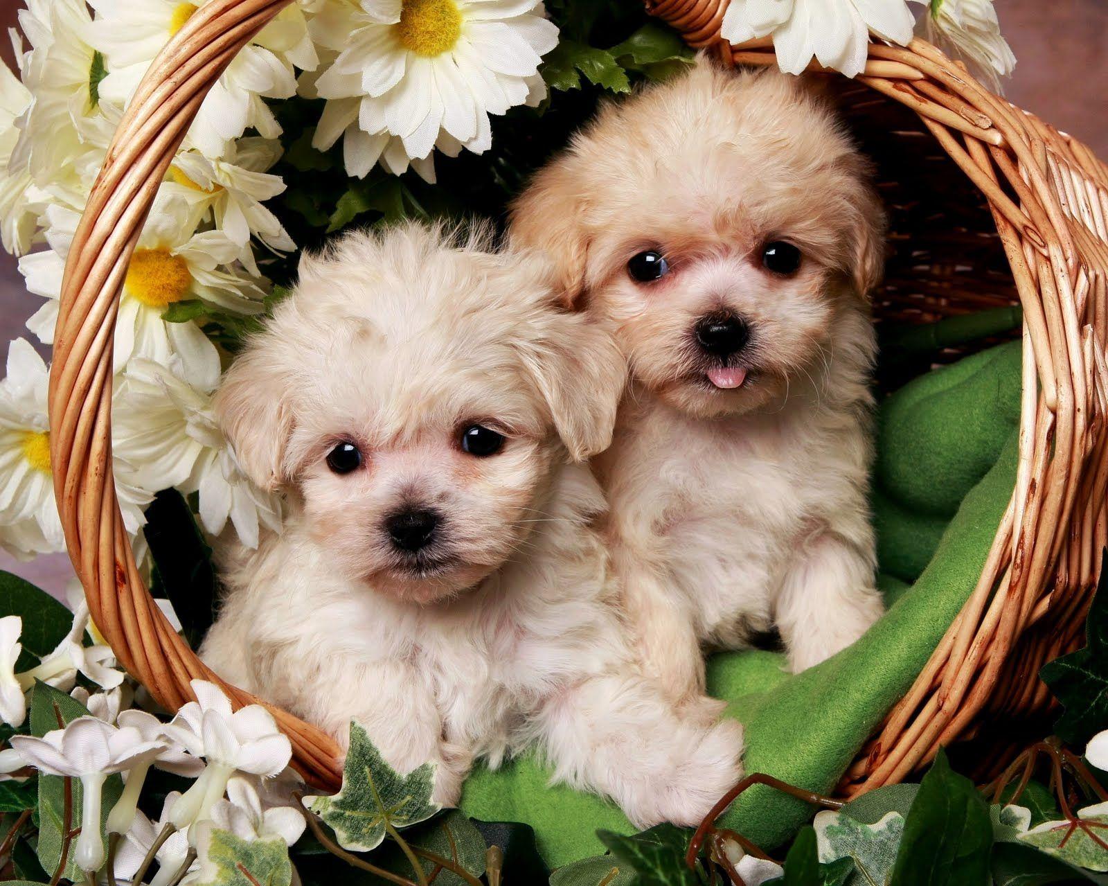 Animal Para Fondo De Pantalla: De Pantalla De Perros