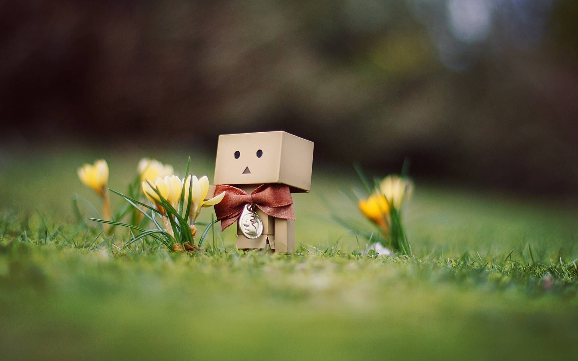 danbo wallpapers - full hd wallpaper search - page 3 | danbo