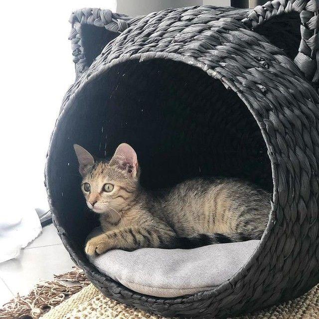 —@solaenzo - ROMY ❤️ Oui oui encore elle 🤣 mais pas trop d'inspiration en ce moment pour les posts . Bonne soirée 😘 #madedesign #cat #catsofinstagram #petsofinstagram #romy #picoftheday