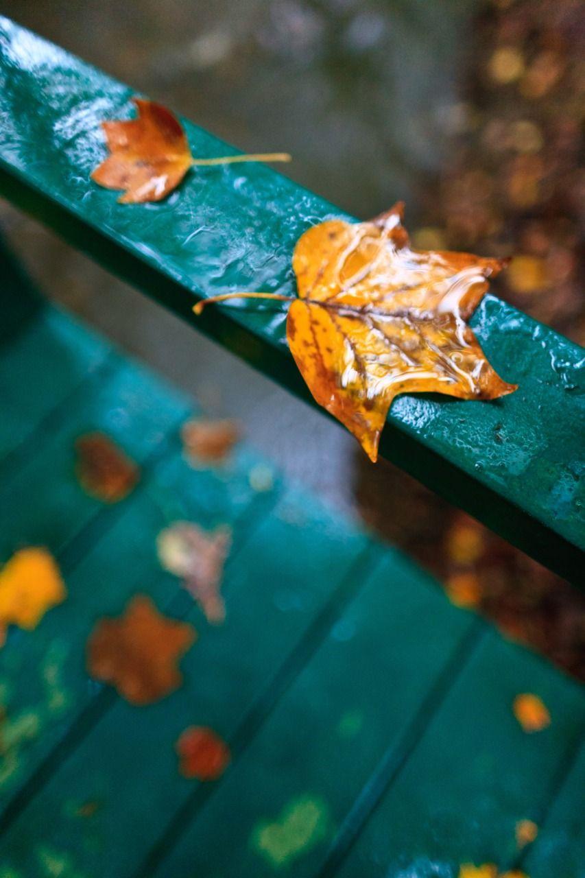 Gorgeous! I love fall. | dulce otoño invierno | Pinterest | Lluvia ...