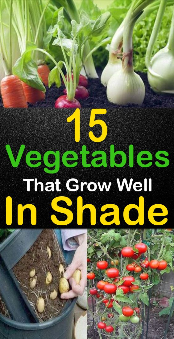 15+ Fantastic Vegetables that Grow in Shade!