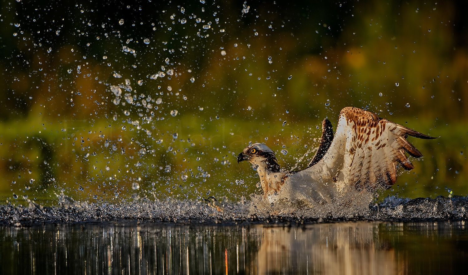 Explosion in water by Félix Morlán González on 500px