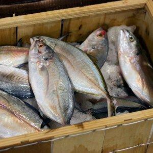 أفضل طريقة لشراء السمك Fish Food Marketing