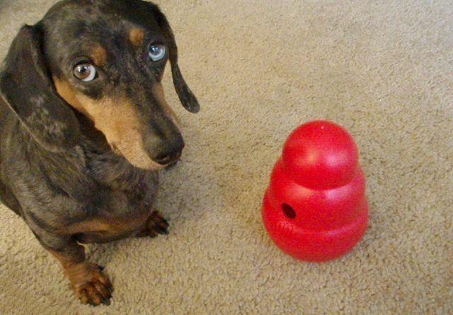 Best Dachshund Toys Best Dog Toys Toy Dachshund Dog Toys