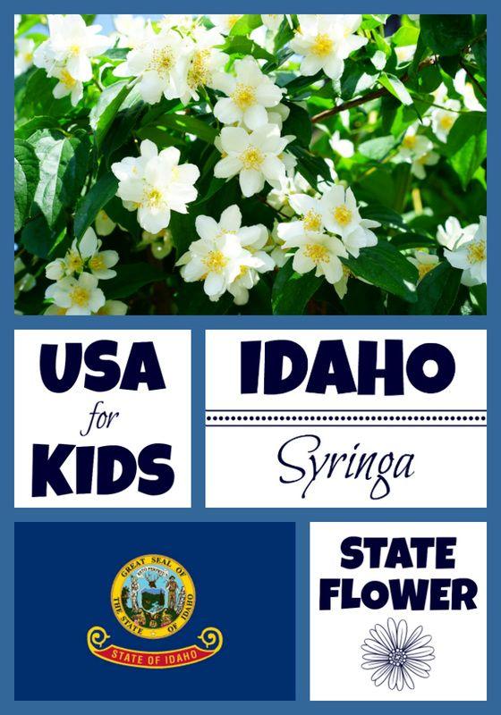 Idaho State Flower Usa Facts Idaho Syringa