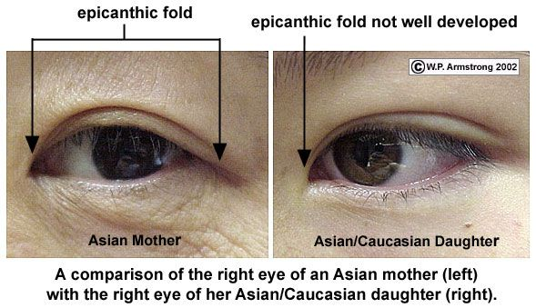 Epicantic Fold Epicanthic Fold Eye Drawing Eye Study