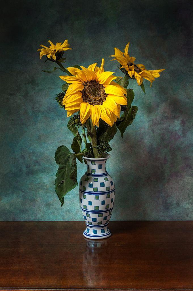 Sunflowers by Osvaldo Gon on 500px