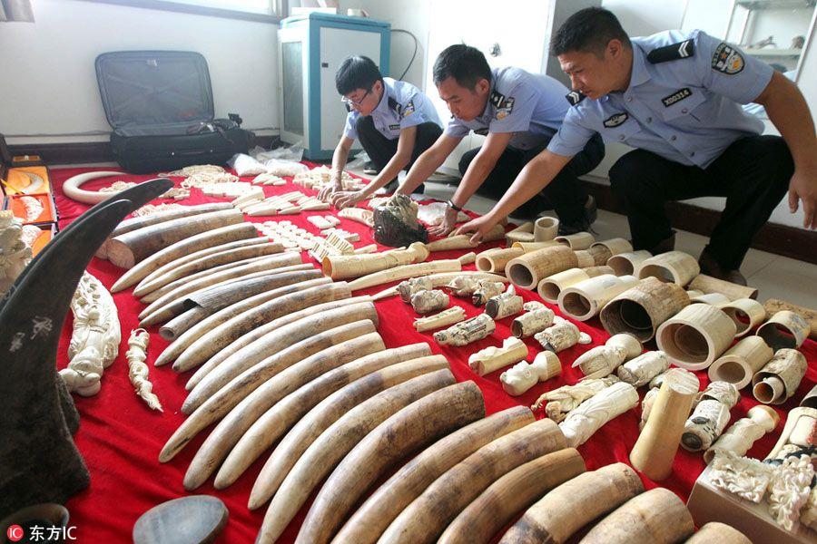 productos de vida silvestre de trata por valor de 45 millones de yuanes…