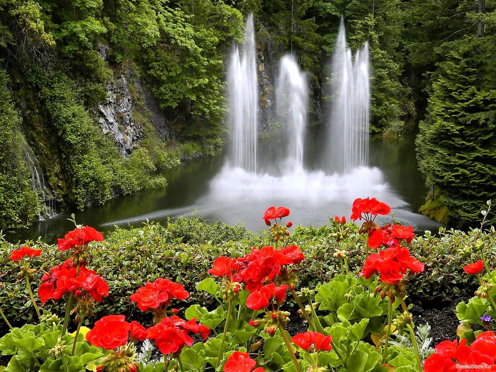 Pin De Blanca Lida Ortiz Cordoba En Jardines Bellos Del Mundo Imagenes De Paisajes Hermosos Cascadas En Movimiento Paisajes Flores