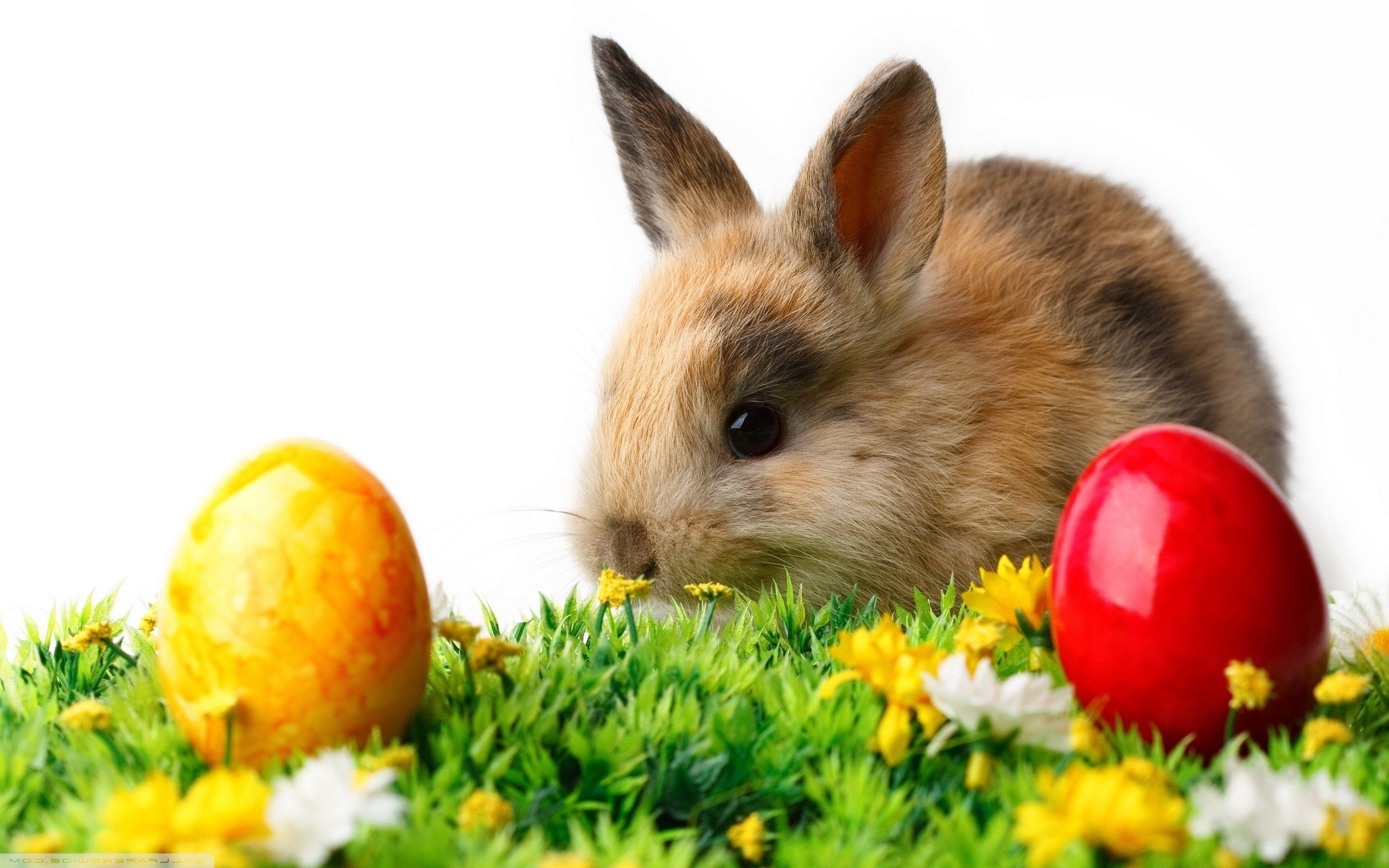 Rabbit easter eggs Wallpapers | Pictures | easter | Pinterest ... for Real Easter Bunny With Eggs  186ref