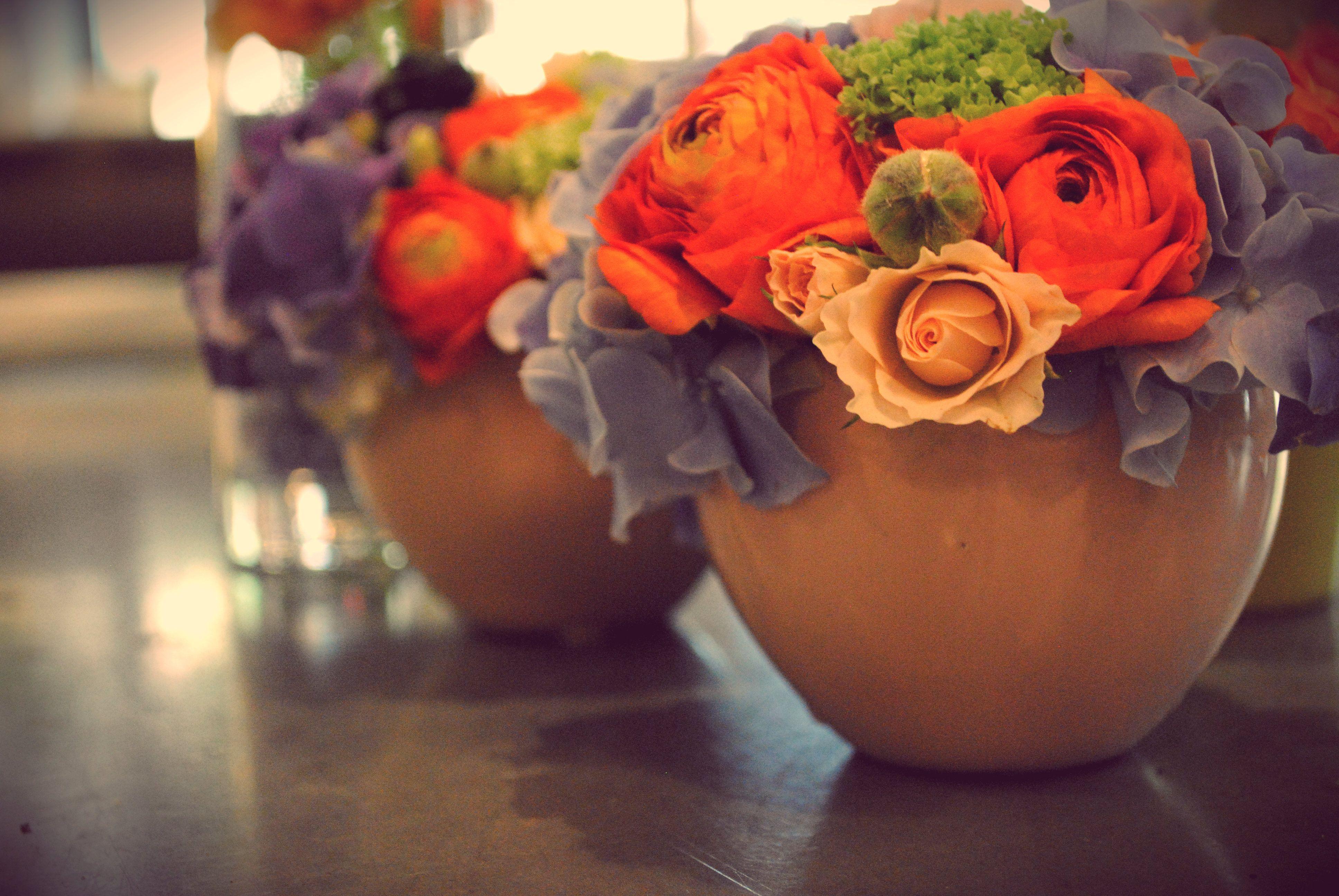 Printemps Spring Flowers Un Peu Beaucoup Crateur Vgtal