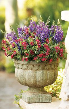 Hummingbird Container Gardening  Container gardening tips to attract hummingbirds and create a colorful oasis of plants and flowers in your own backyard.    Hummingbirds love Superbells, from Proven Winners.  Transform your yard into a metropolis for hummingbirds with simple, stunning containers they will love.