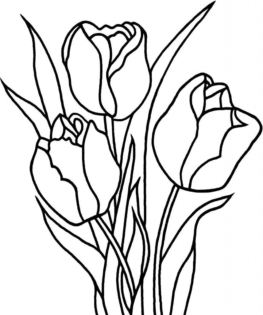Free Printable Tulip Coloring Pages For Kids Flower Coloring