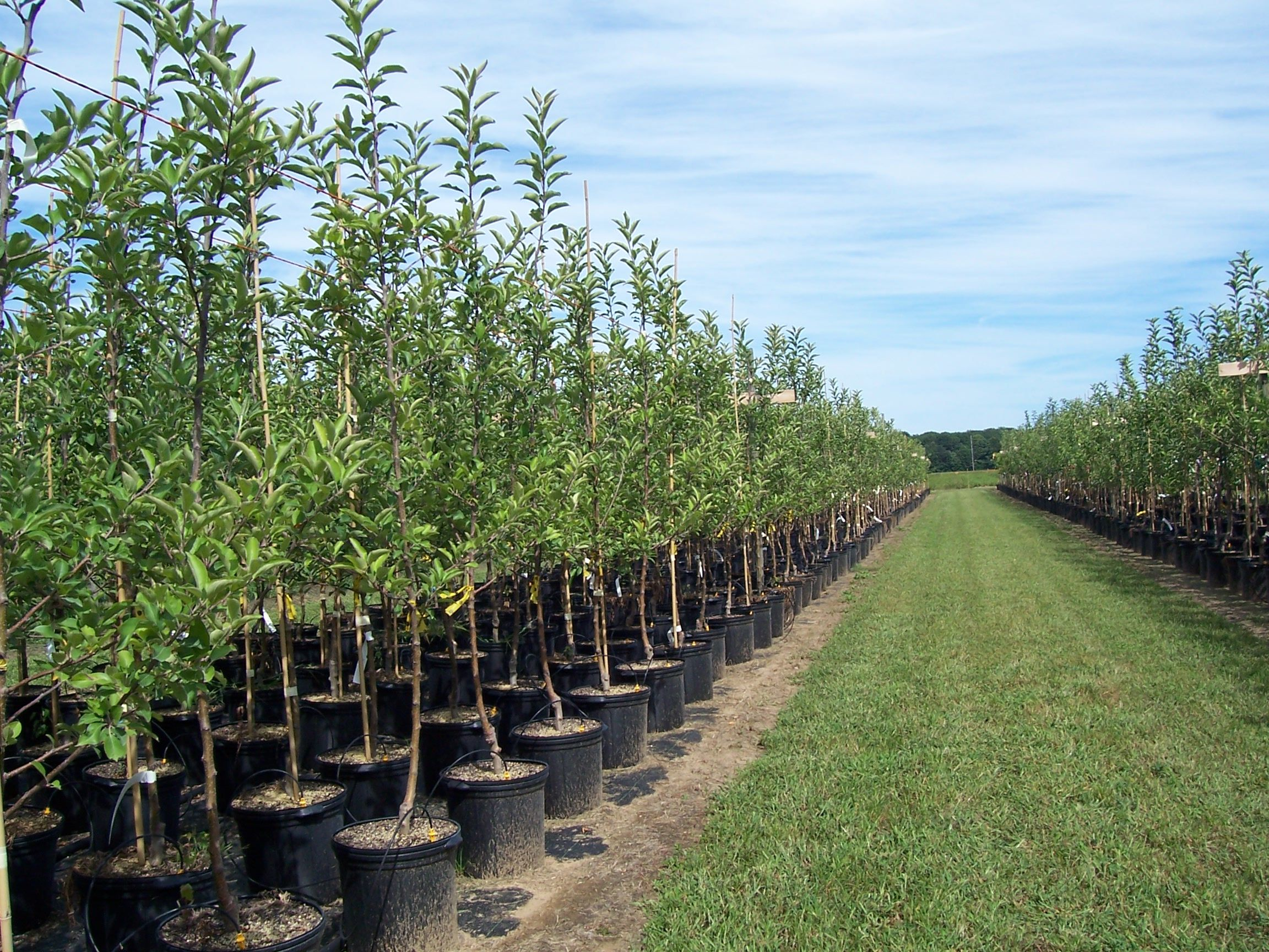 Tree Nursery Google Search 21 Best Garden Air Pruning Images On Pinterest Container