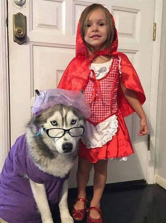reddit the front page of the Husky costume