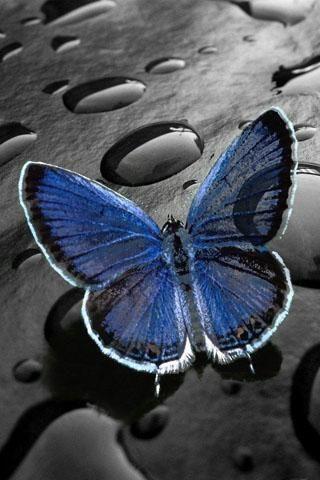 cool lock screen wallpaper - Bing images | Blue butterfly ...