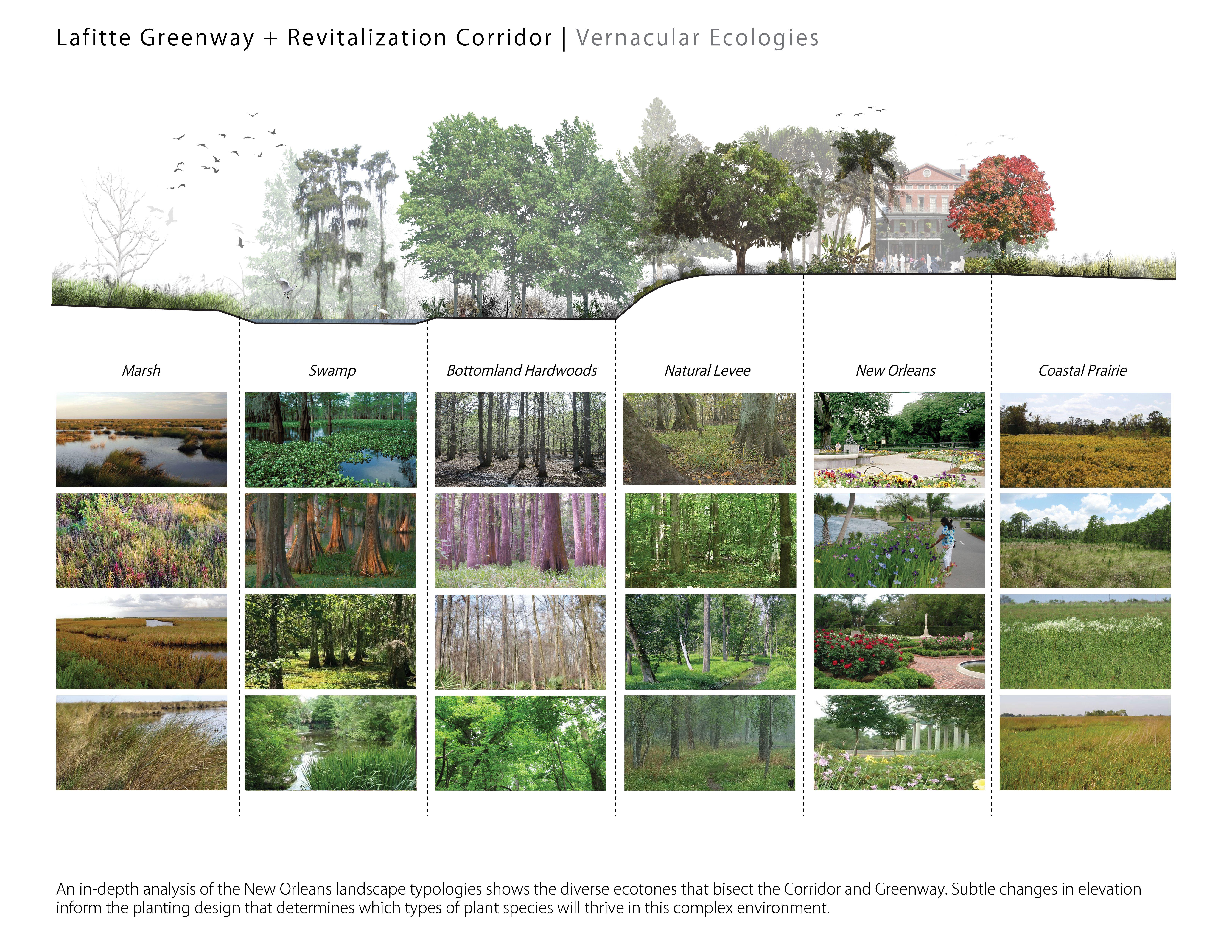 Corridor Roof Design: Lafitte Greenway + Revitalization Corridor