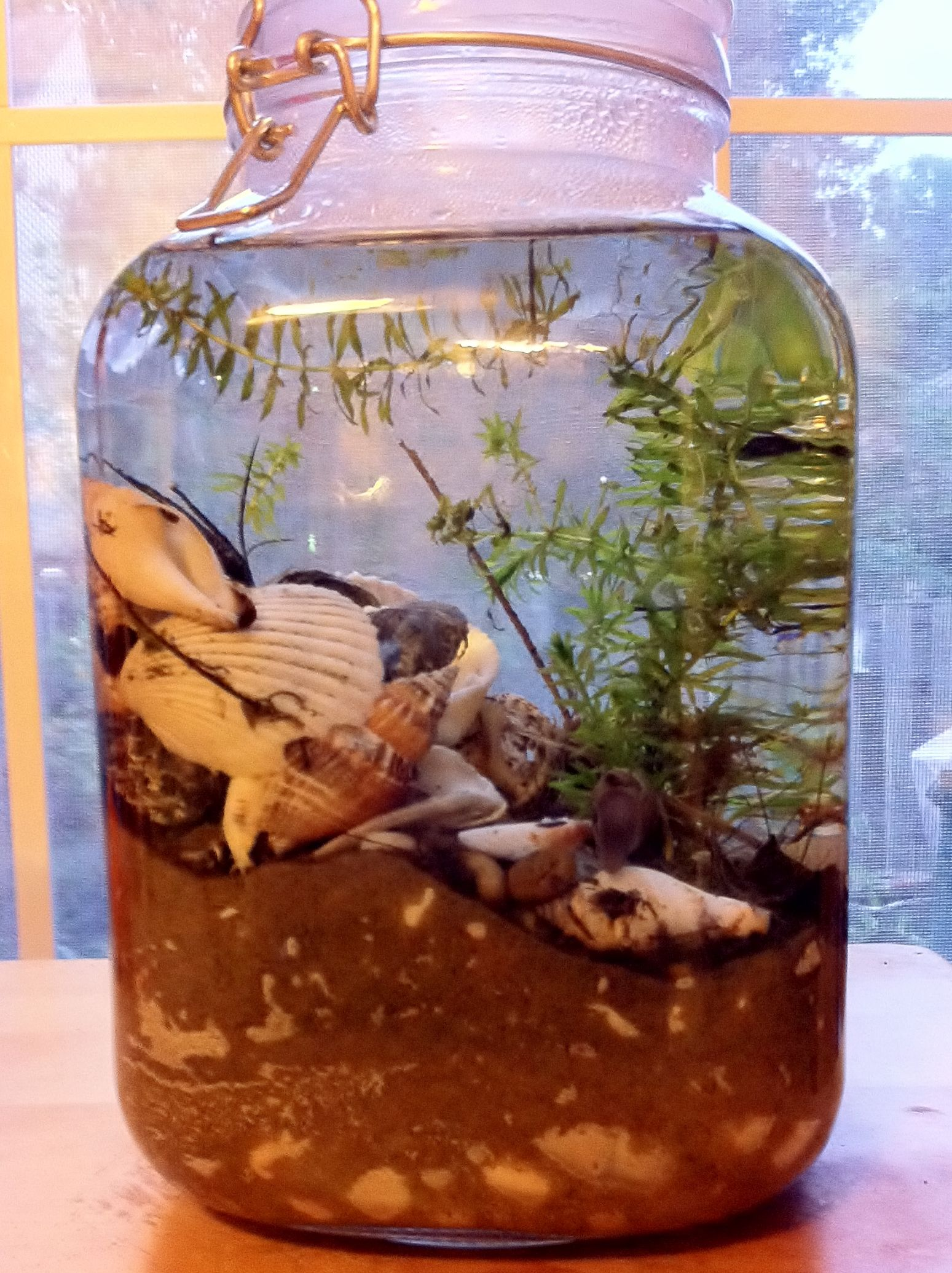 self sustaining snail ecosystem terrarium in 1l jar completed