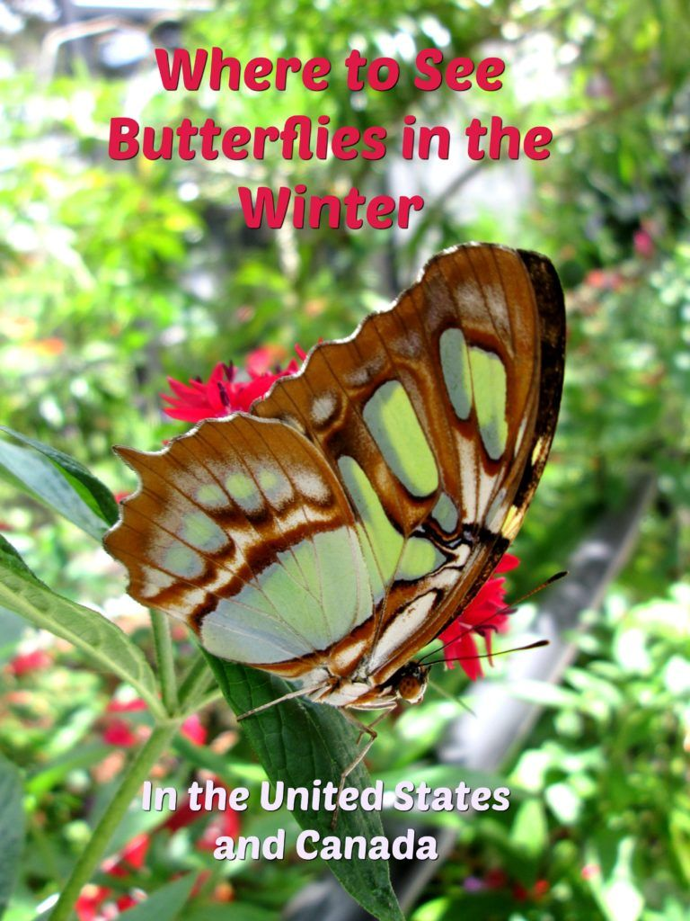 Butterfly Lady | Education, Gardening and Fun: Spreading the Joy of Butterflies to Everyone!