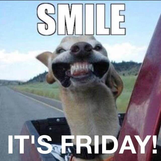 Funny Friday Dog Meme : Dog smile friday memes humour funny …