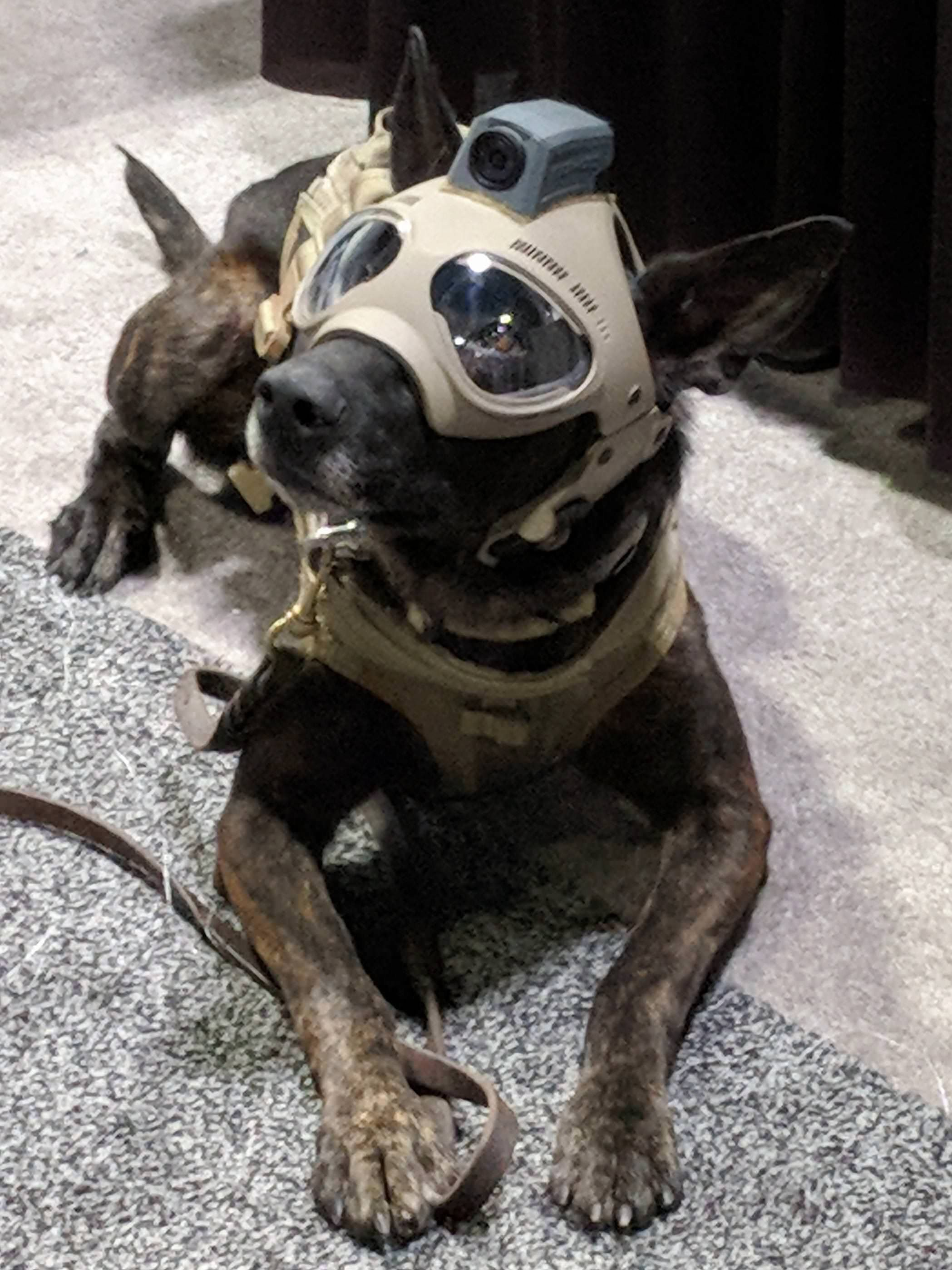 Tactical dog helmets.. The future is now | Dog helmet, Dog ...