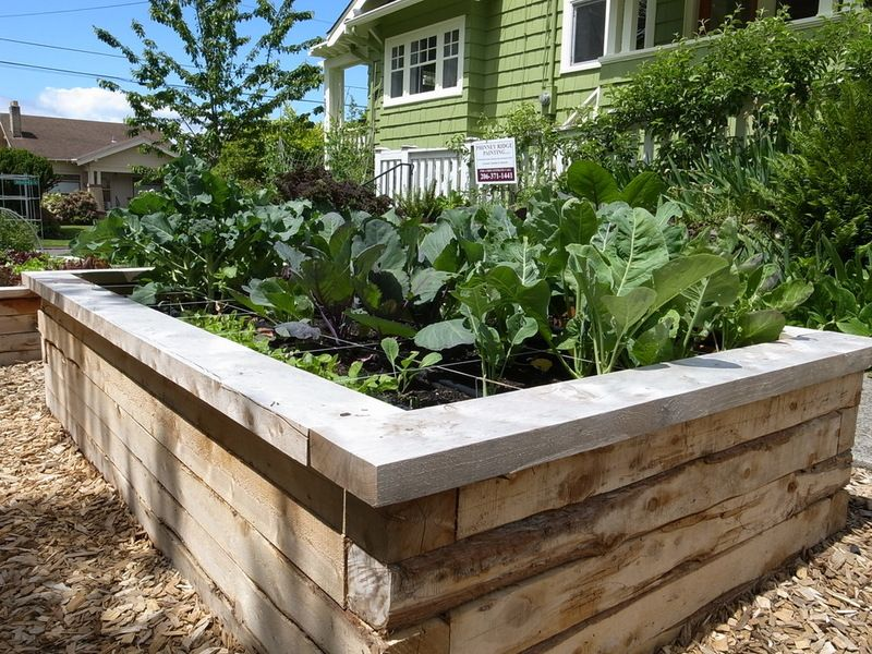 Raised Beds Made From 4x4 Juniper Wood Bug And Rot Resistant But