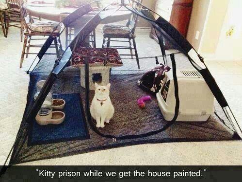 cat prison
