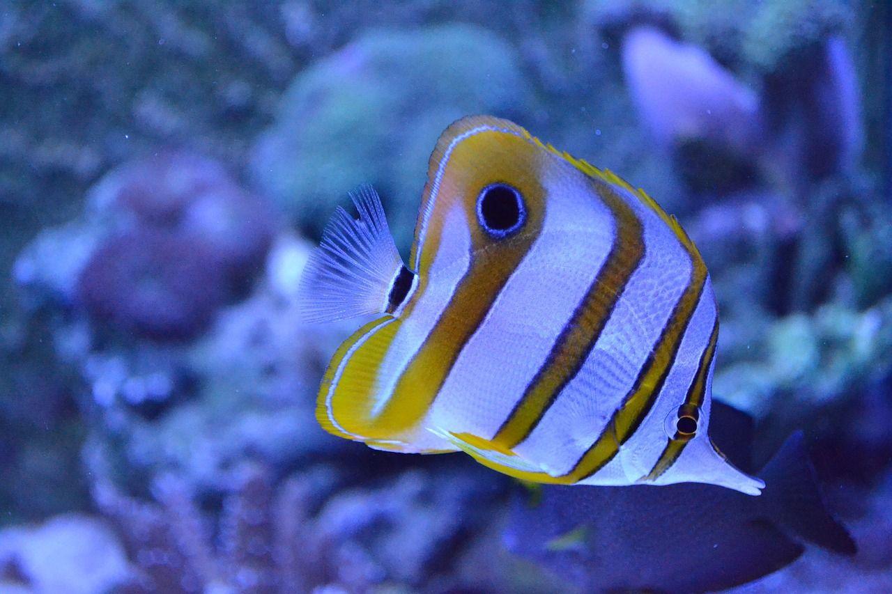 Fish Aquarium Marine Sea Mundo Marino Animales